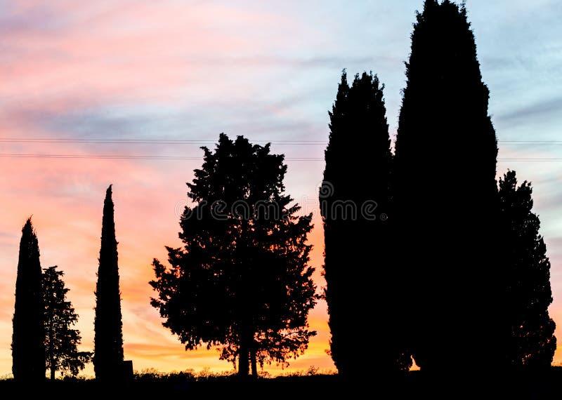 Cipreses de Toscana contra el cielo de la puesta del sol fotos de archivo libres de regalías