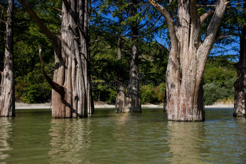 Cipressi della palude sul lago immagini stock libere da diritti