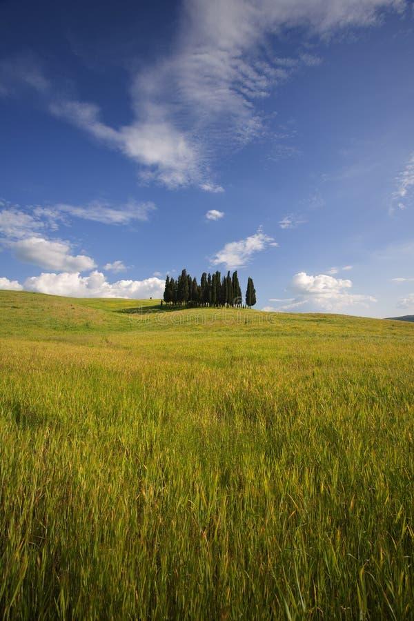 Cipressi della Toscana fotografia stock