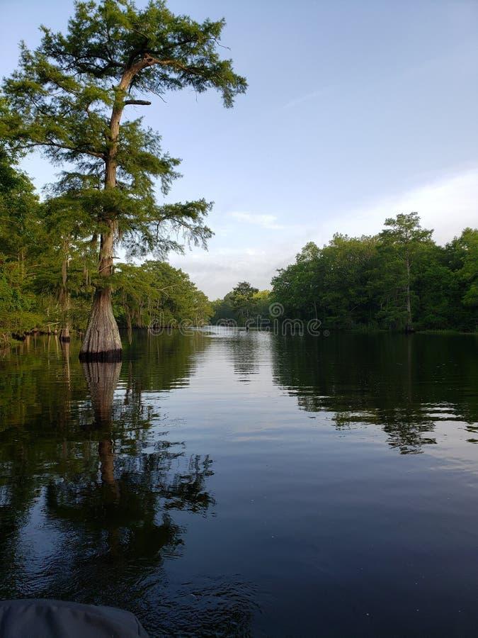 Cipreste de Louisiana foto de stock royalty free