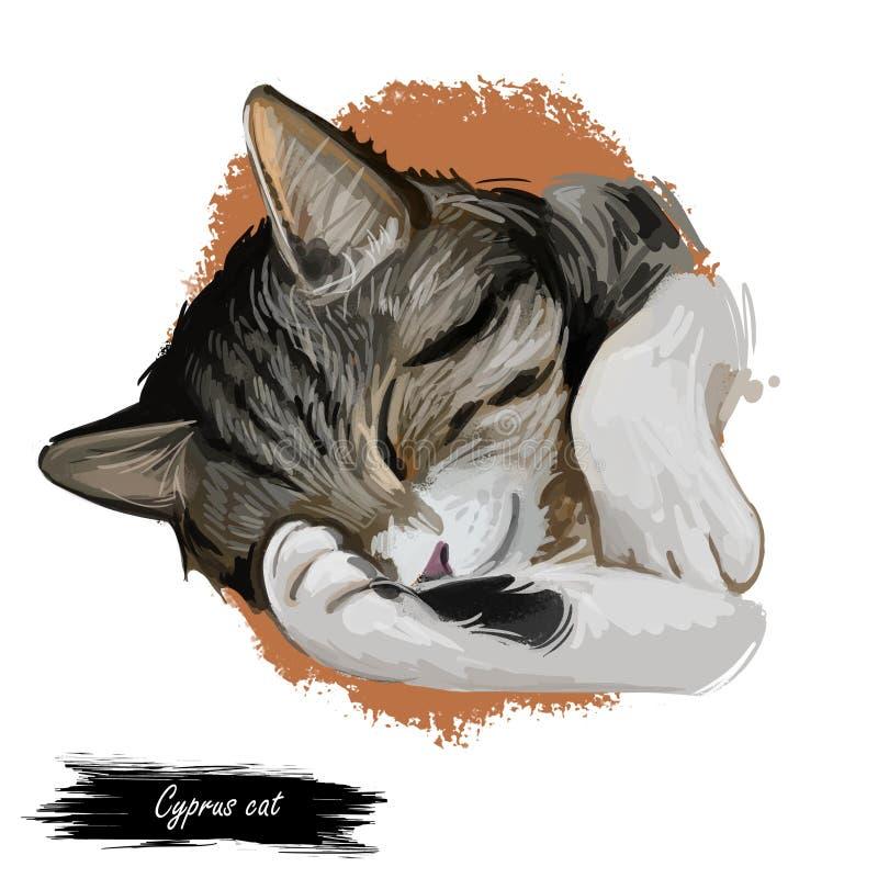 Cipriota Cat Portrait Isolated de Chipre em branca, arte de Digitas ilustração do vetor