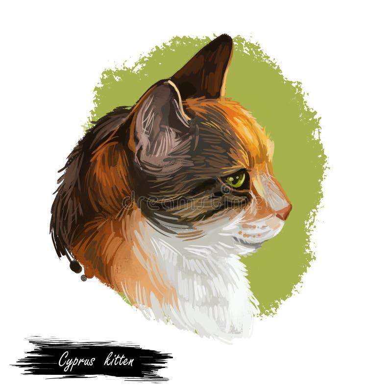 Cipriota Cat Portrait Isolated de Chipre em branca, arte de Digitas ilustração royalty free