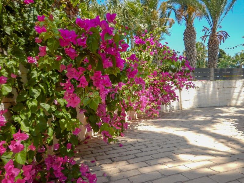 Cipro del Nord, giugno 2019 Bellissima premessa interna al cypriot house fotografia stock libera da diritti