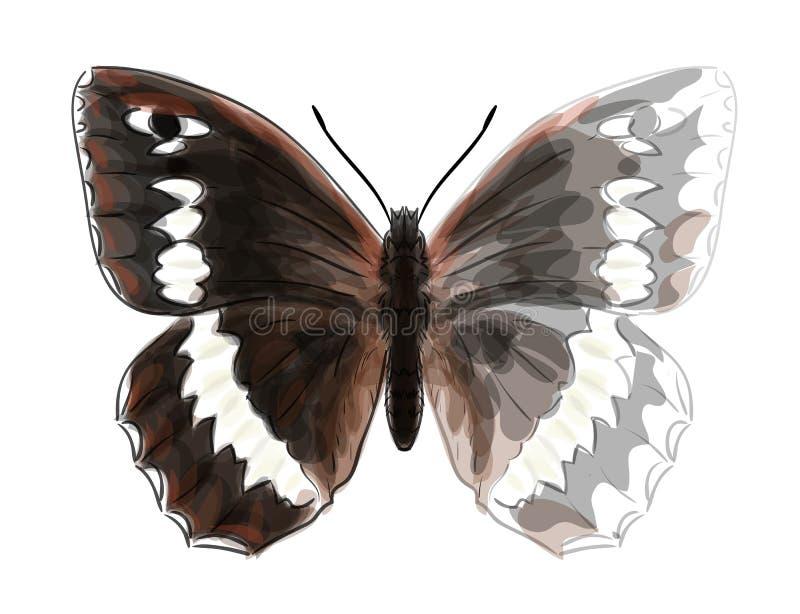 circe бабочки brintesia иллюстрация штока