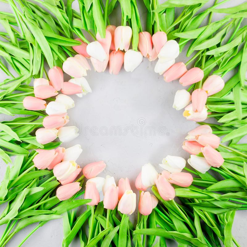 Circle floral frame made of tulips laying on grey background stock images