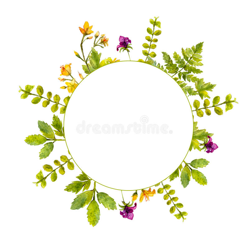 Circle frame with painted watercolor green plants and wild flowers. Nature inspired border for natural cosmetics, spring. And summer events royalty free illustration