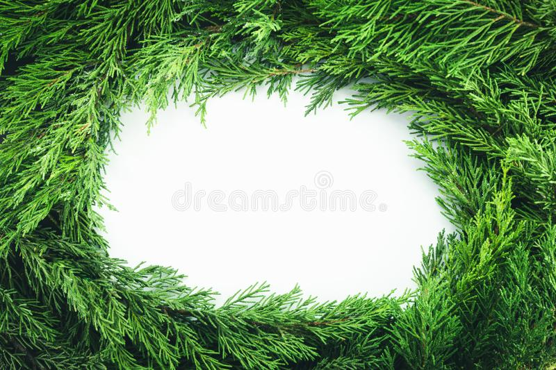 Circle frame with pine tree branches isolated on white background. Christmas and New year decoration royalty free stock photos