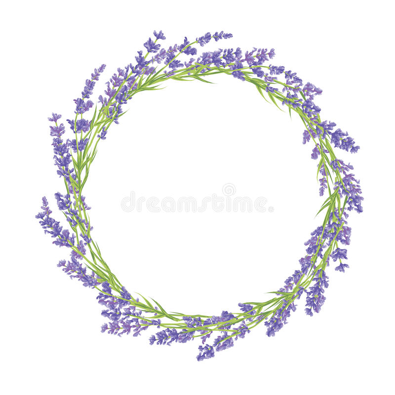 Circle of lavender flowers. Circle of hand drawn lavender flowers . Hand drawn design for Thank you card, Greeting card or Invitation. Vector illustration