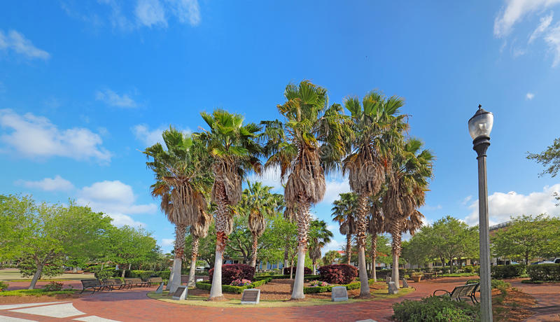 Circle of palm trees on the Beaufort, South Carolina waterfront. Circle of cabbage palm trees Sabal palmetto in the Henry C. Chambers Waterfront Park off of Bay stock photo