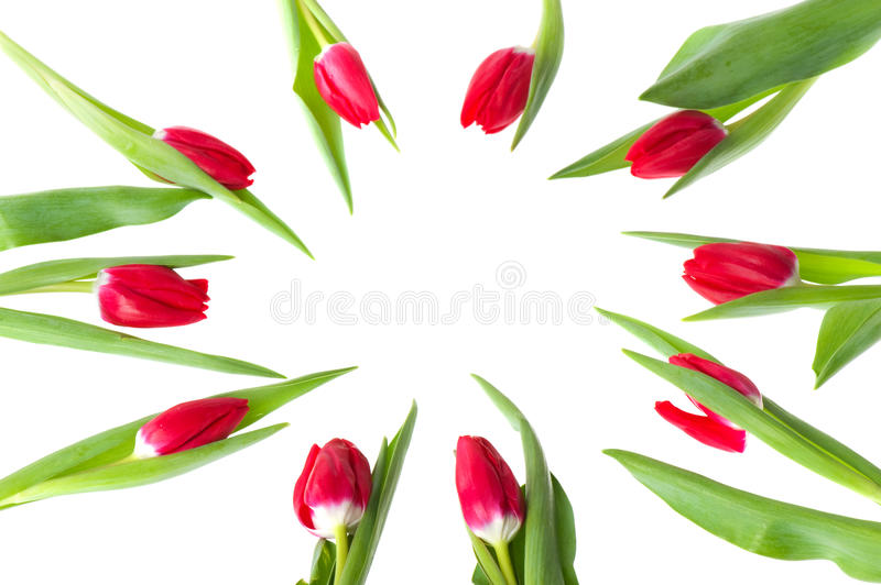 Download Circle red tulips stock photo. Image of arrangement, flowers - 17724472