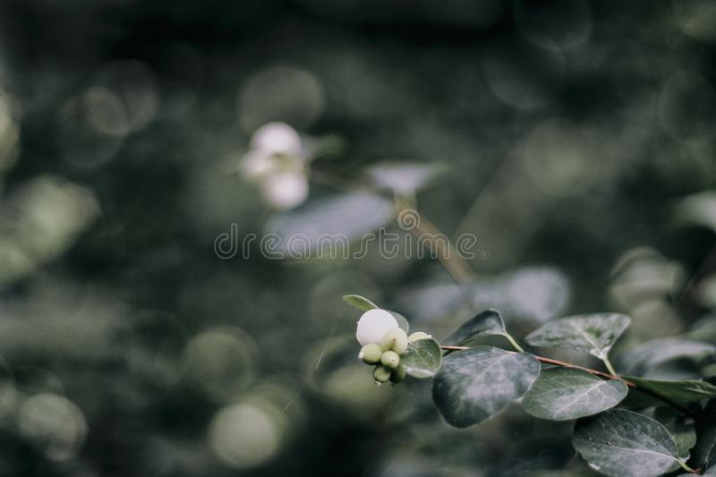 Circles in nature with bokeh. Natural circles with bokeh and spider`s web. For lifestyleblogger and nature lover royalty free stock photography