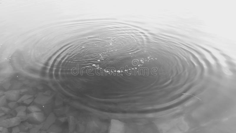 Circles in the water royalty free stock photo