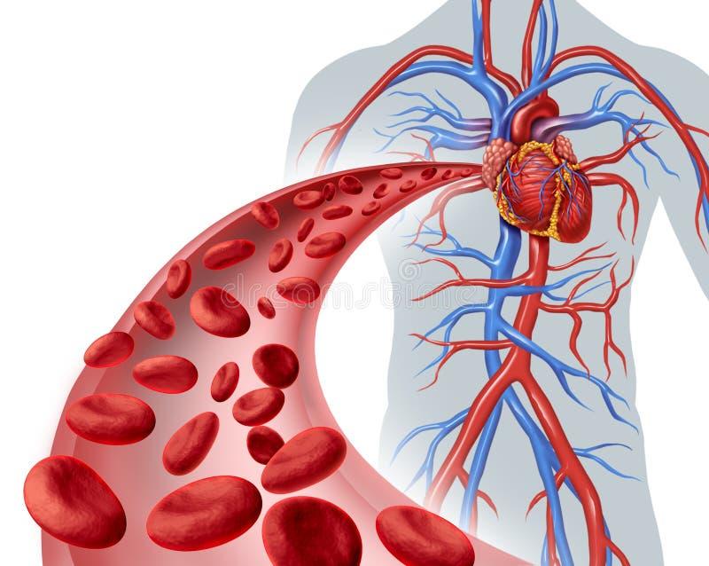 Circolazione coronarica del sangue illustrazione vettoriale