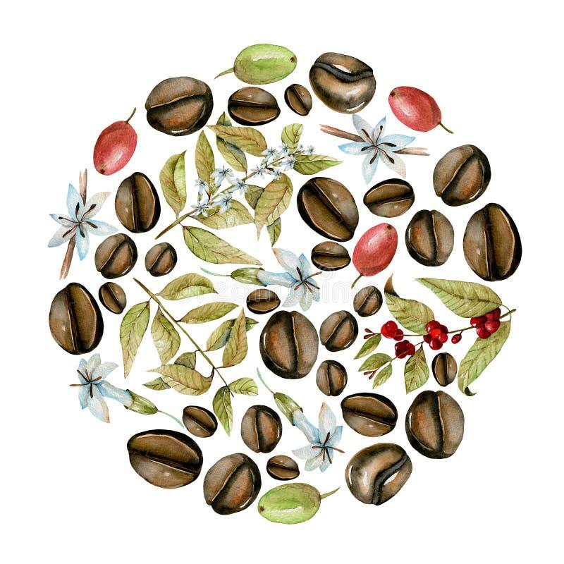 Circondi l'illustrazione dai rami, dai fiori e dai fagioli del caffè dell'acquerello nelle fasi differenti di maturazione illustrazione vettoriale