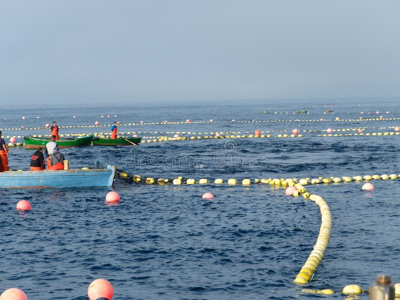 Circuit of yellow buoys used for the trap stock photography