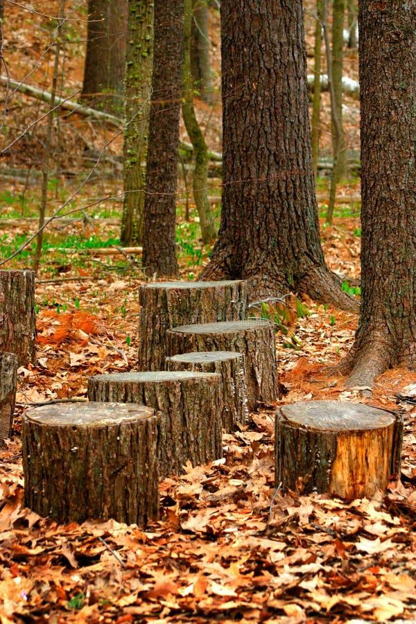Circuiti di collegamento di albero fotografia stock libera da diritti