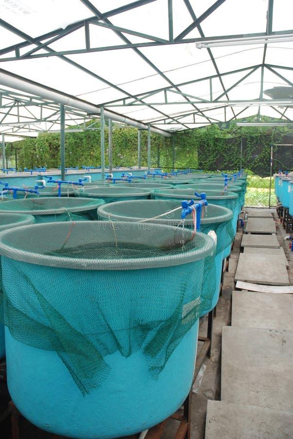 Circuito de agua de la acuacultura de la agricultura foto de archivo
