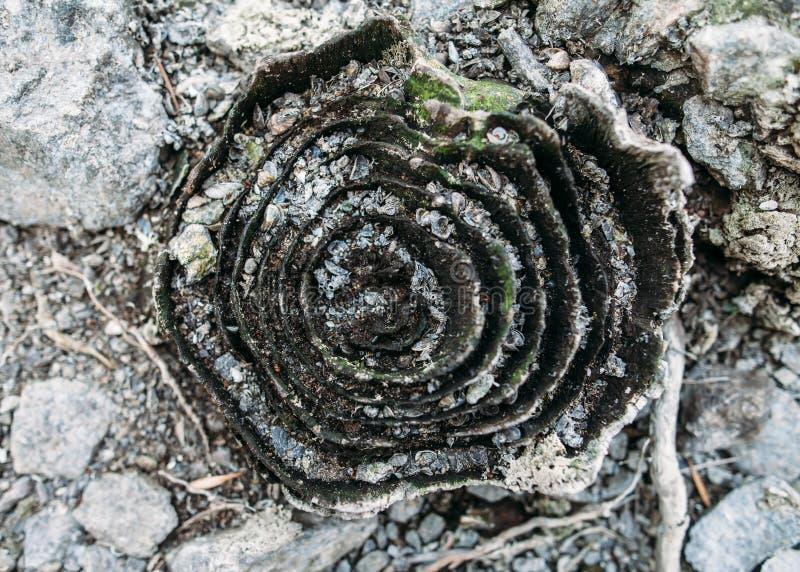 Circuito di collegamento di albero asciutto Priorità bassa della natura immagini stock libere da diritti