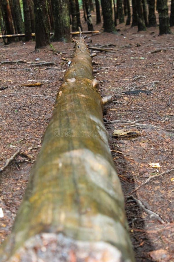 Circuito di collegamento di albero caduto fotografie stock libere da diritti