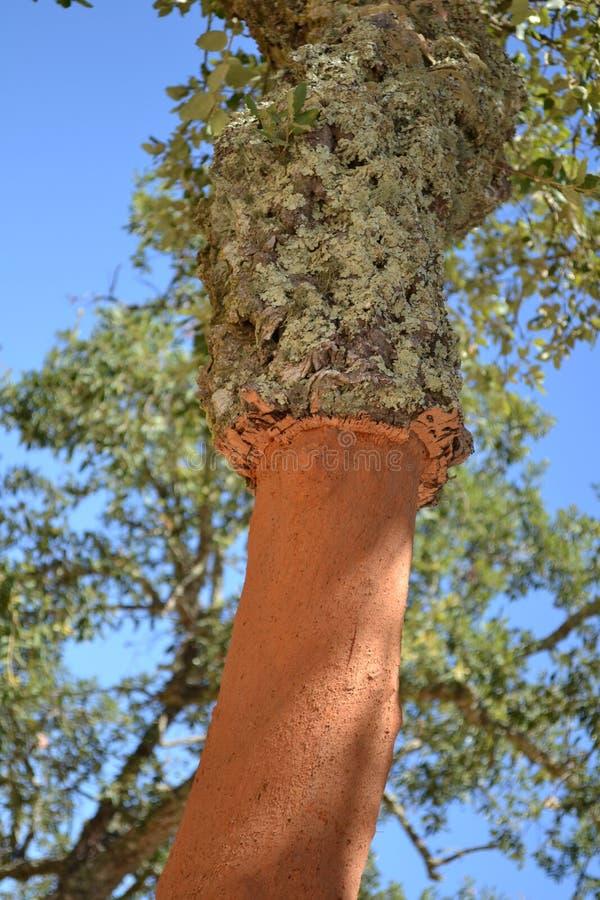 Circuito di collegamento di albero del sughero immagini stock