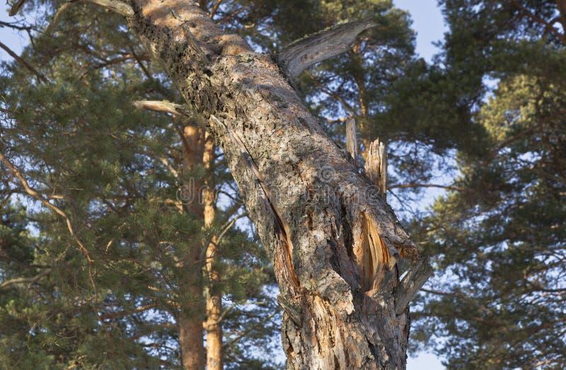 Circuito di collegamento di albero rotto immagini stock