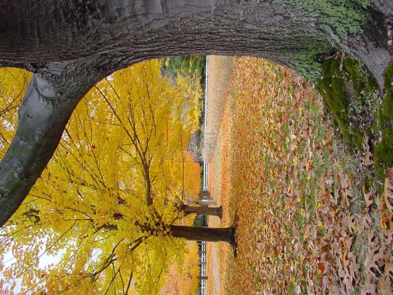 Circuito di collegamento ed alberi fotografie stock libere da diritti
