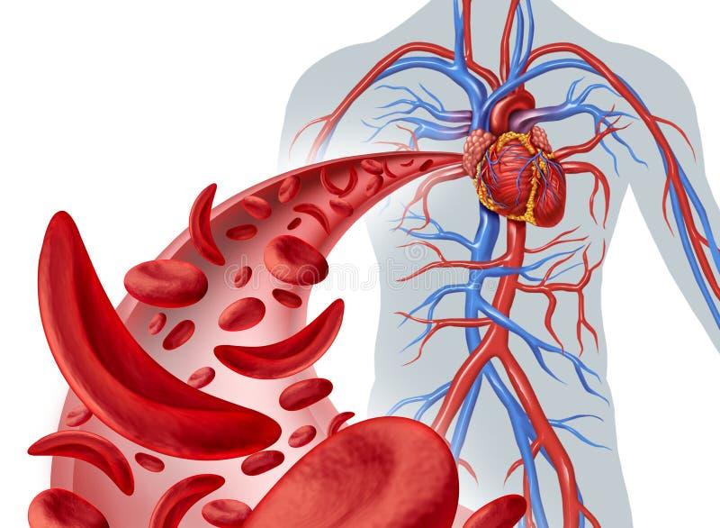 Circulação de coração da célula falciforme ilustração do vetor