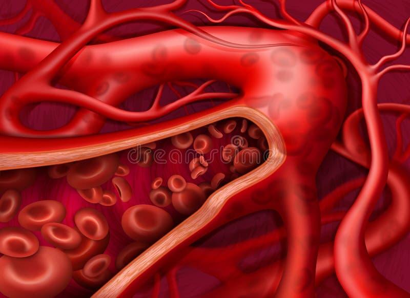 Circulação do sangue na veia ilustração royalty free