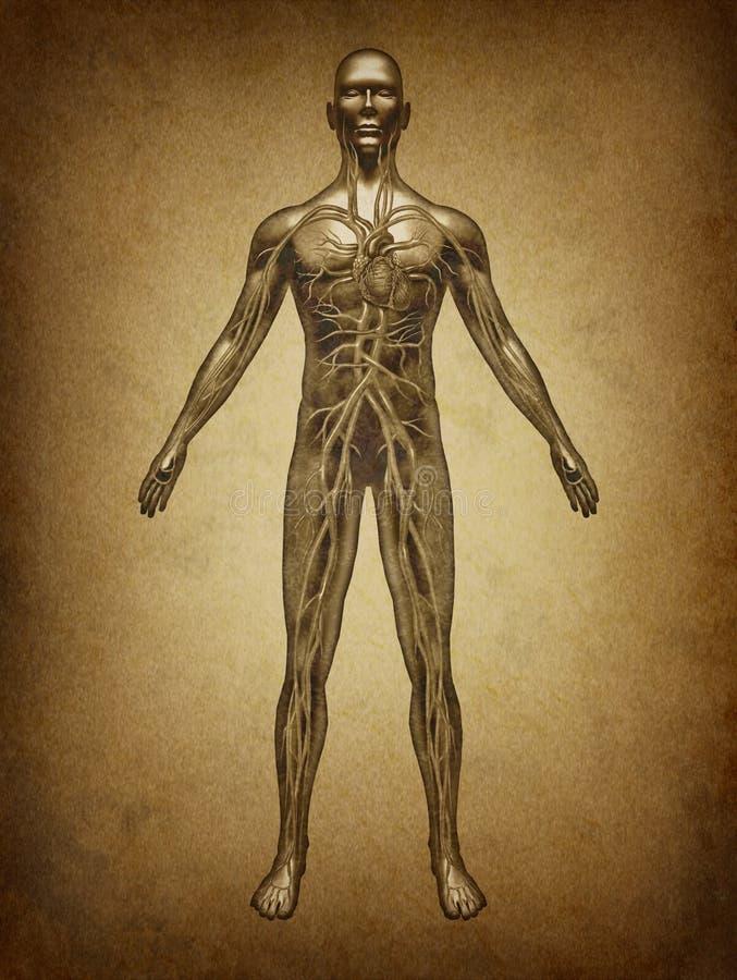 Circulação humana Grunge ilustração royalty free