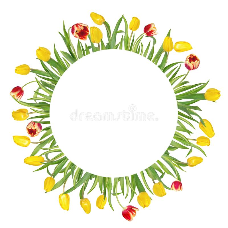 Circular floral frame made of beautiful red and yellow tulips on long stems with green leaves. Isolated on white background. stock photos