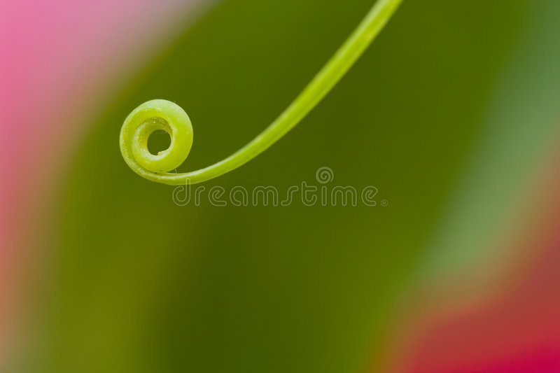 Circular green leaf stock photography