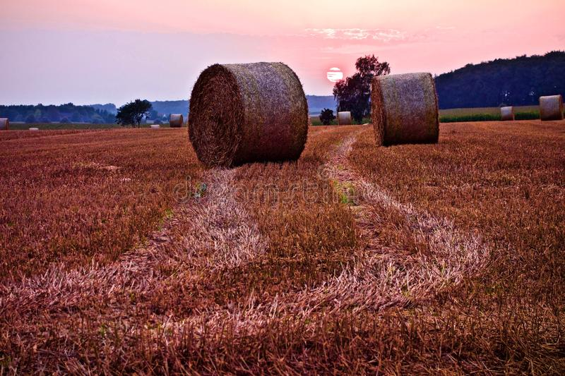 Circular hay bales on a farm field at sunset. Circular hay bales with vehicle tracks through the freshly cut grass on a farm field at sunset with a colorful pink royalty free stock photo