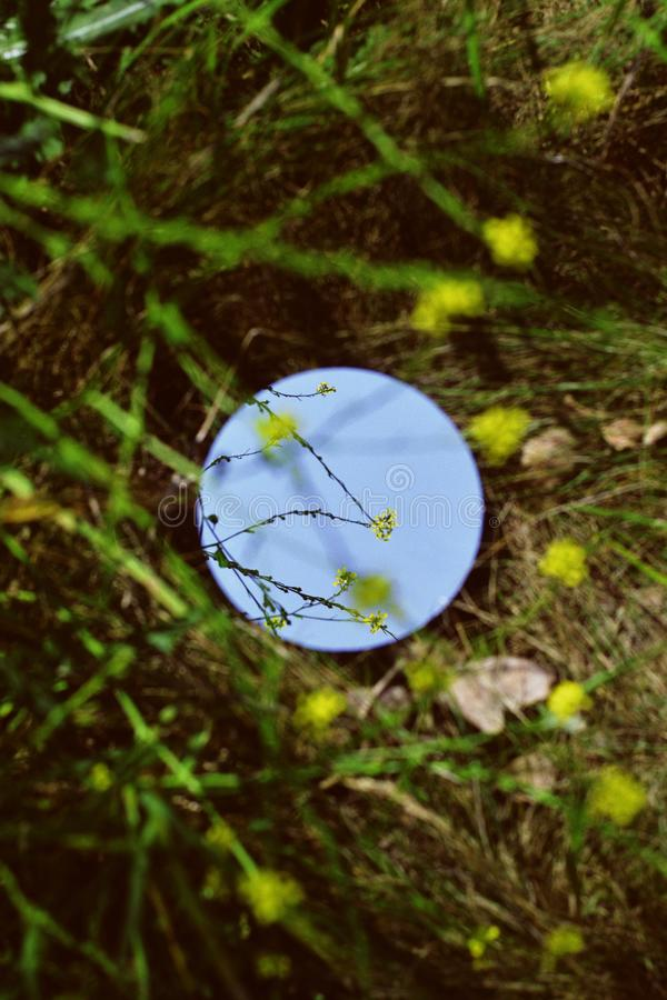 Circular mirror in a green field with greenery all around stock image