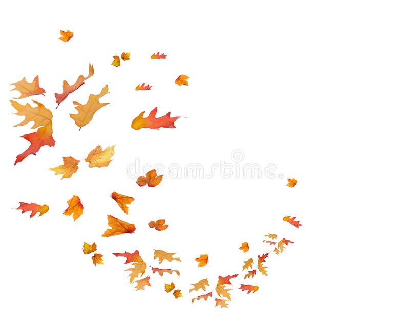 Circular pattern of Fall Leaves Isolated. Orange, red, yellow, and brown colors stock image
