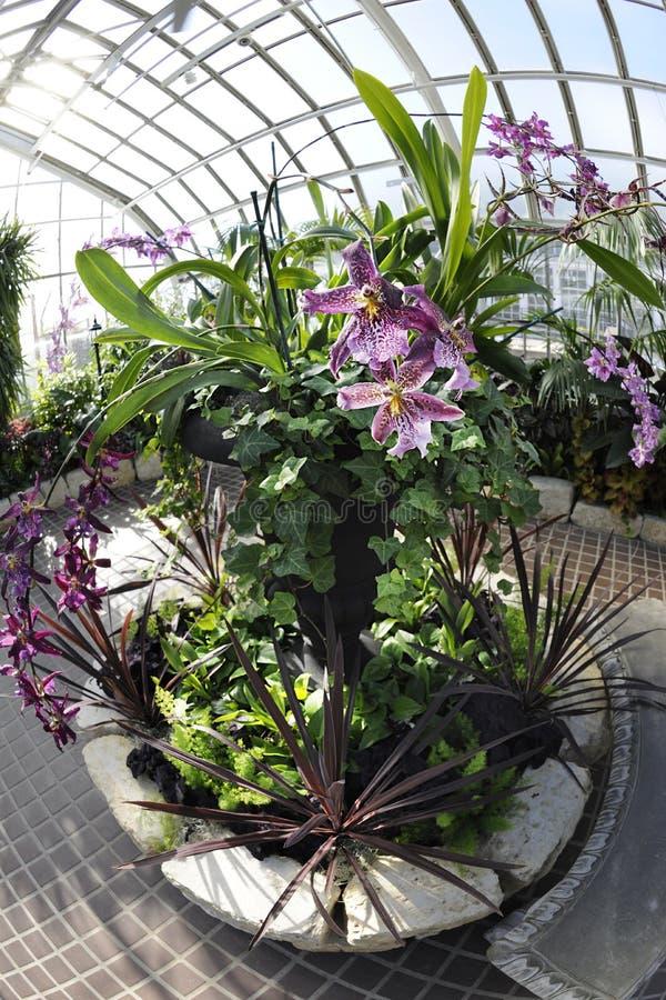 Download Circular Plantings stock image. Image of tiles, purple - 23491125