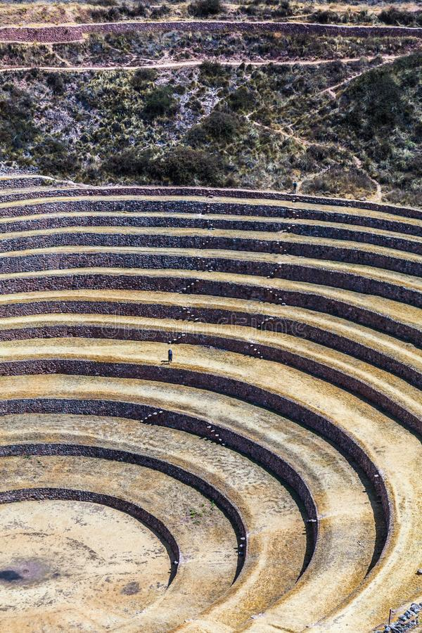 Circular terraces of Moray. Possibly an Inca agricultural laboratory, in summer with dry and yellow vegetation stock image