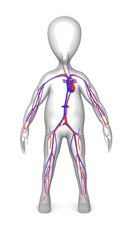Download Circulatory stock illustration. Image of medicine, anatomy - 13498756