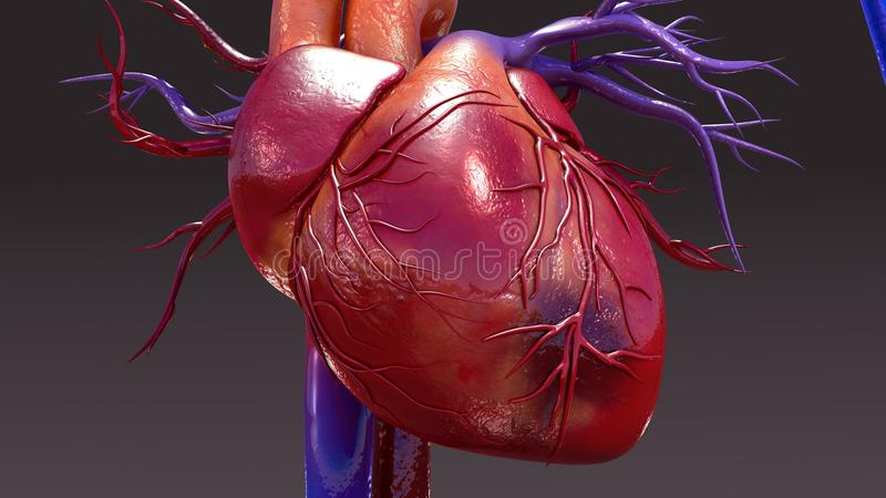 Circulatory System Infection. The circulatory system is a vast network of organs and vessels that is responsible for the flow of blood, nutrients, hormones vector illustration