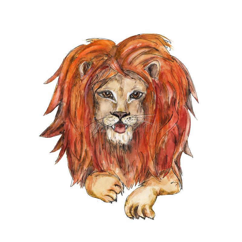 Circus lion character  vintage watercolor drawing clipart illustration isolated on white. Circus character  vintage watercolor drawing clipart illustration vector illustration