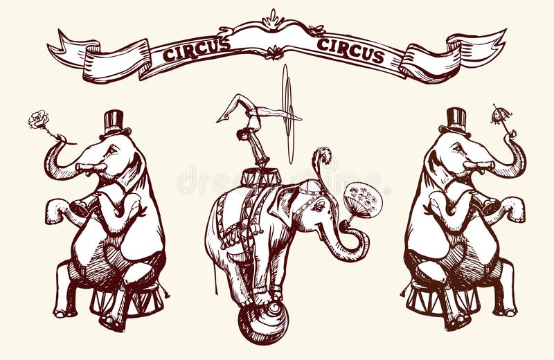Circus elephants. Perform a trick.Acrobat with a hula hoop on an elephant with a balli. Vector vintage illustration. Image in the style of engraving for a stock illustration