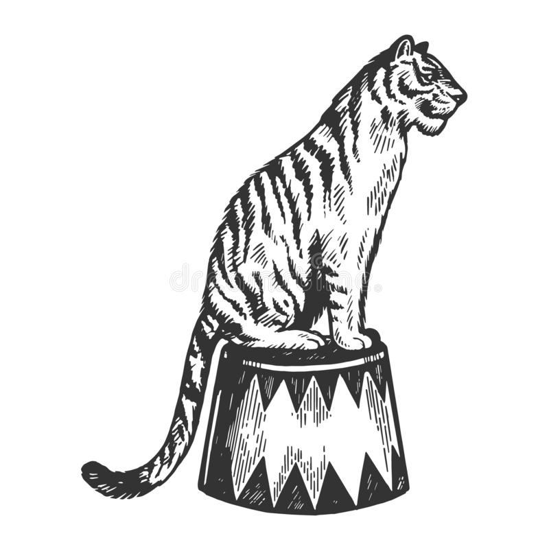Circus tiger animal engraving vector illustration. Scratch board style imitation. Black and white hand drawn image stock illustration