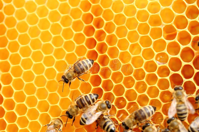 Cire d'abeille et abeilles photographie stock libre de droits