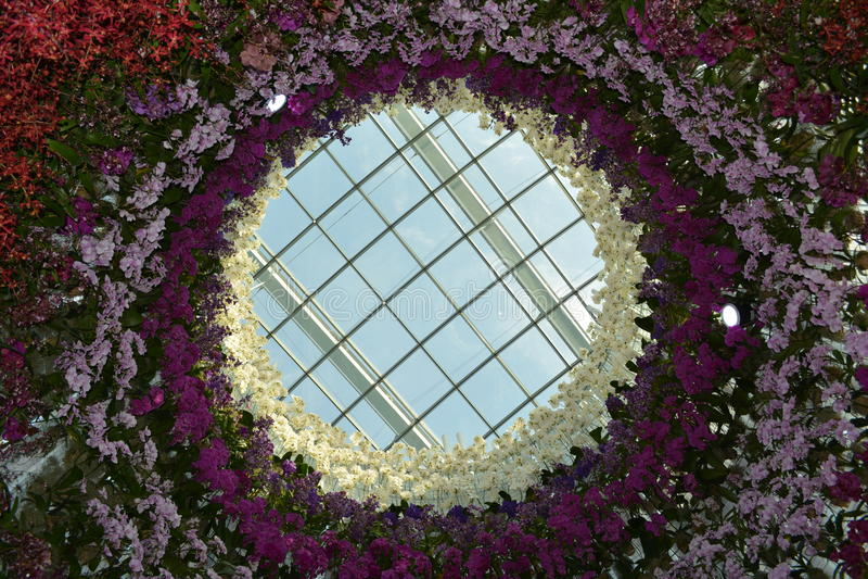 Cirkel av orkidér royaltyfri bild