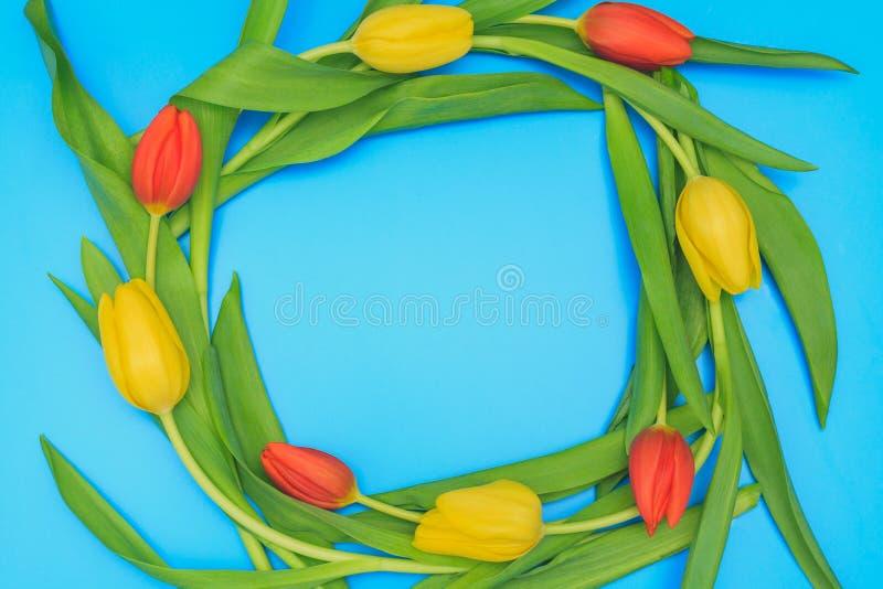 Cirkel av röda och gula tulpan på blå pastellfärgad bakgrund royaltyfria foton