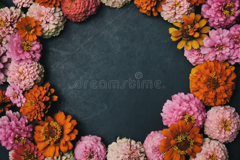 Cirkel van de bloemhoofden van Zinnia royalty-vrije stock foto