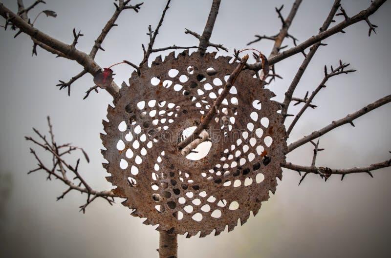 Cirkeldieschijf op een boom wordt vastgehaakt royalty-vrije stock afbeeldingen
