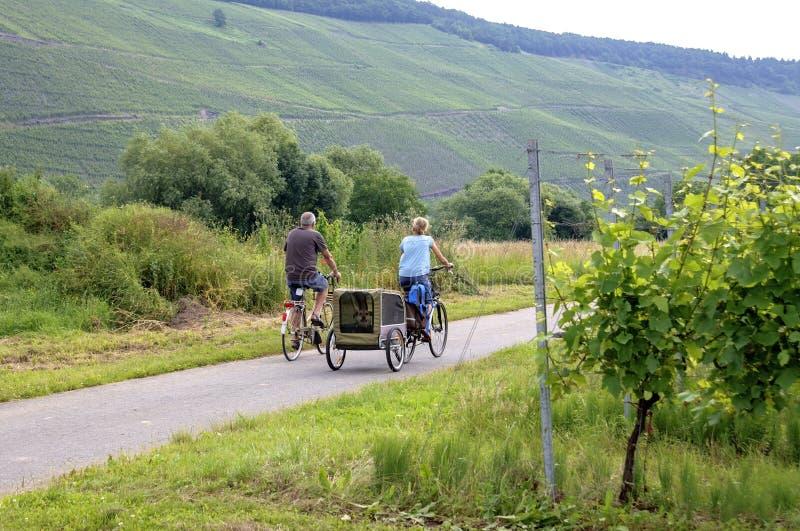 Cirkelend langs wijngaarden op de Moezel, Duitsland stock foto's