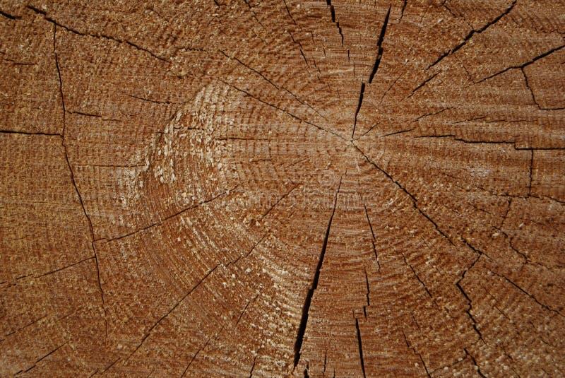 cirkelsnitt delde trä arkivbilder