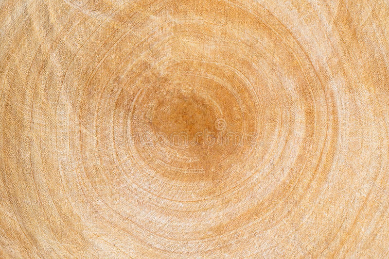 Cirkeltextur för rått trä royaltyfri foto