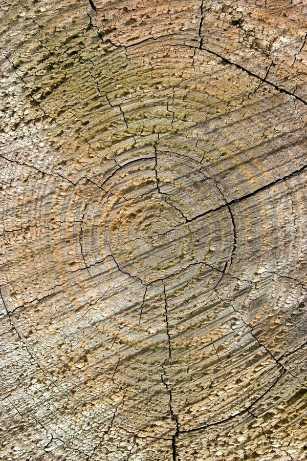 cirkeltexturträ arkivbild